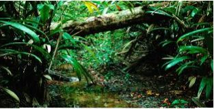 Biogeochemical Consequences of Hydrologic Conditions in Isolated Stands of Terminalia Cattapa in the Rainforest Zone of Southern Nigeria